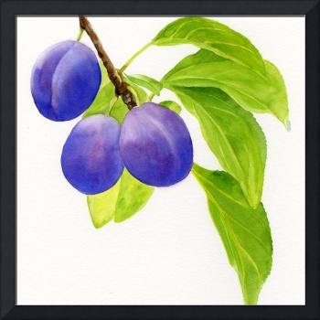 Blue and Purple Plums Square Design