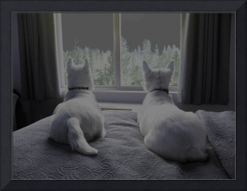 Comfortable Friends Looking Out - Beni And Phoebe