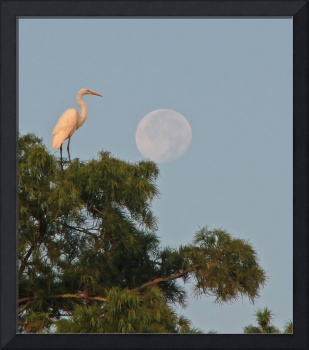 Egret with Full Moon
