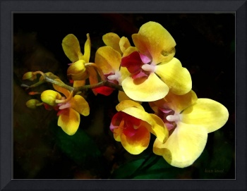 Yellow Orchids Shadow and Light