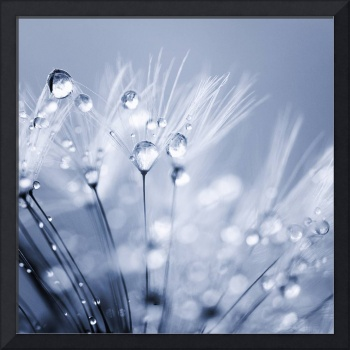Dandelion Seed with Water Droplets in Blue