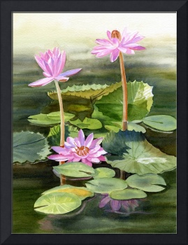 Three Pink Water Lilies with Pads