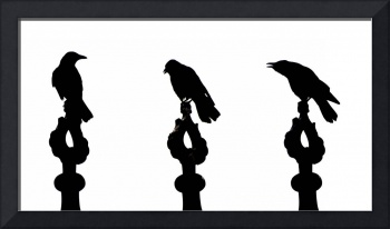 Crow silhouettes showing different phases of