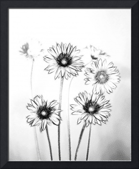 daisies pencil