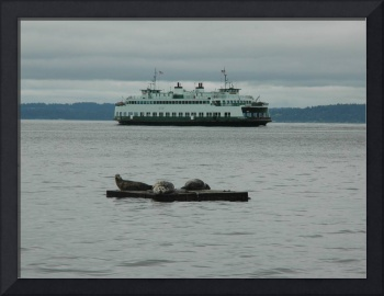 ferry and seals