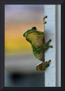 Green Tree Frog 2016 It's Not Easy Being Green