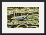 Heron In The Lily Pads by Rich Kaminsky