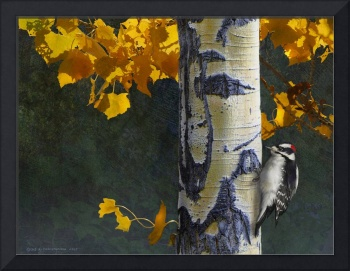 aspen and downy woodpecker