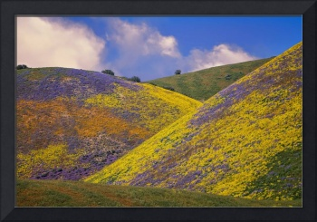 Crazy Colors On The Carrizo - Superbloom 2017