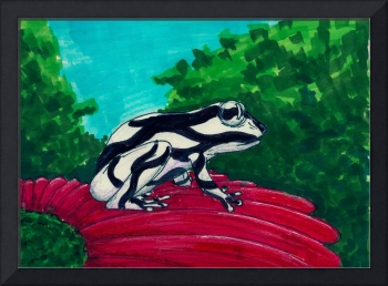 black and white frog