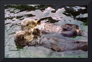 Sea Otters Holding Hands