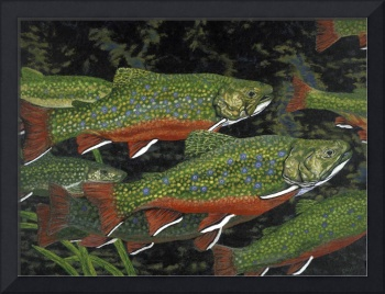 Fine Art Prints Fish Trout Water Brook Trout