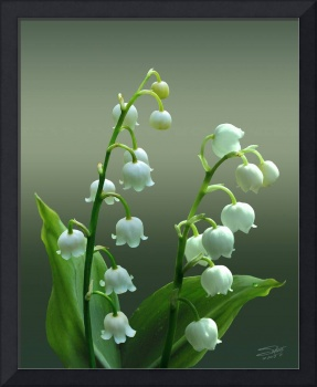 The Lily of the Valley