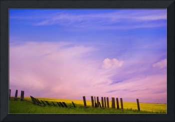 An Old Fence Against A Canola Field