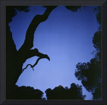 Tree branches in silhouette against blue dusk sky