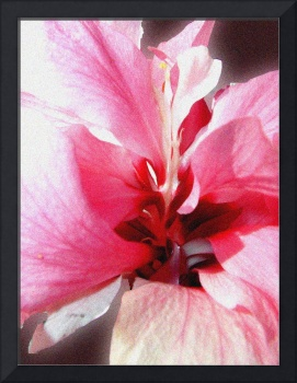 Pink Bunches Hibiscus