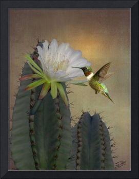Hummingbird and Blooming Apple Cactus