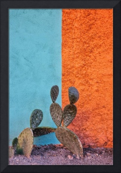 Cactus and colorful wall