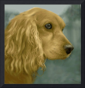 Field Spaniel portrait