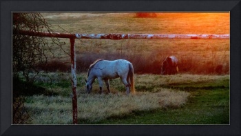 Sunset Horses on a Texas Ranch