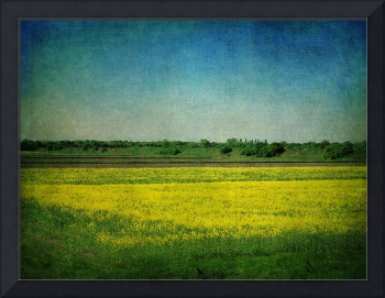 the yellow field 2