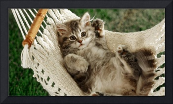 Grey Tabby Cat Loves Playing In A Hammock