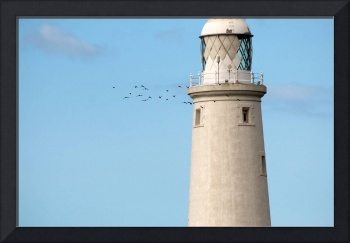 Crows Circling Lighthouse