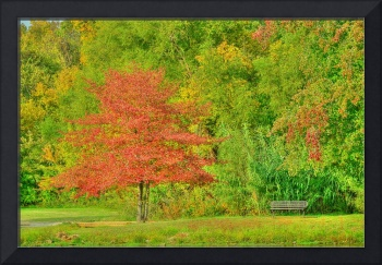 Fall color in HDR
