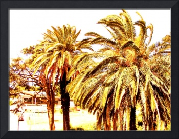 Palm trees abstracted