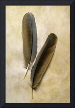 Pinyon Jay Feathers I