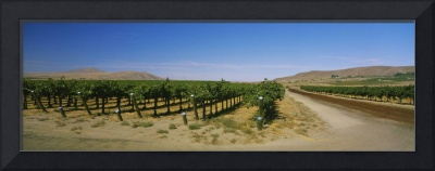 Dirt road passing through a vineyard