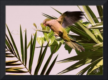 Parrot and Palms