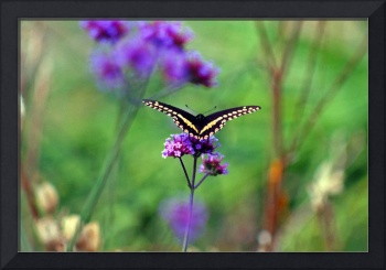 Butterfly in Fantasy Field