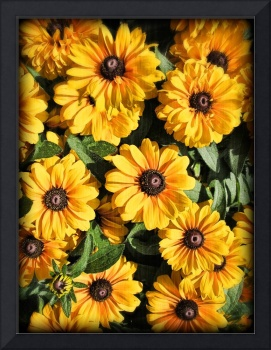 Yellow Black-eyed Susans on a Vintage Background