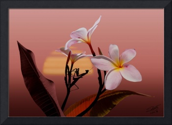 Frangipani and Mantis Sunset