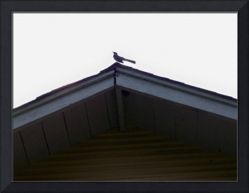 bird roof top