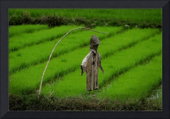 Ricefield Guardian