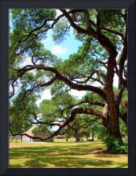 Oakland Creole Plantation Grounds