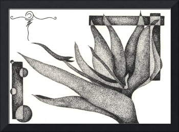 Pen & Ink Illustration Of A Bird Of Paradise