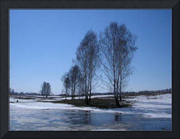 The early spring, thaws snow, naked birches