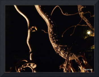 Night shot of walking stick shrub 2
