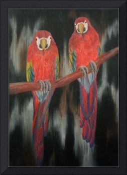 Two Red Parrot
