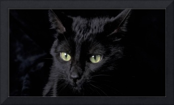 Haunting Black Cat