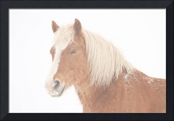 Palomino Horse Headshot Snow and Fog