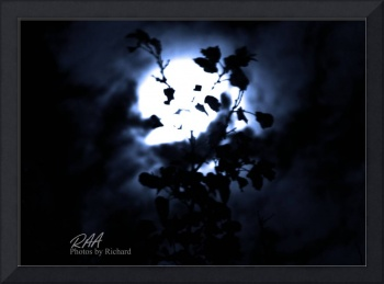 Moon Leaf_Just Picture