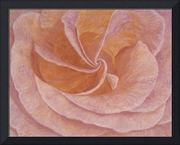 Fine Art Prints Rose Wall Art Roses Garden Nature