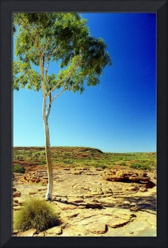 Kings Canyon Tree