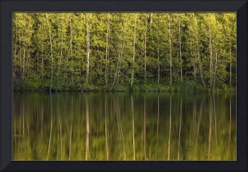 Trees Reflected In The Water Foster, Quebec, Cana