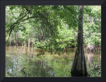 Dead River along the Choctawhatchee River Basin