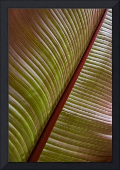 Large Tropical Leaf